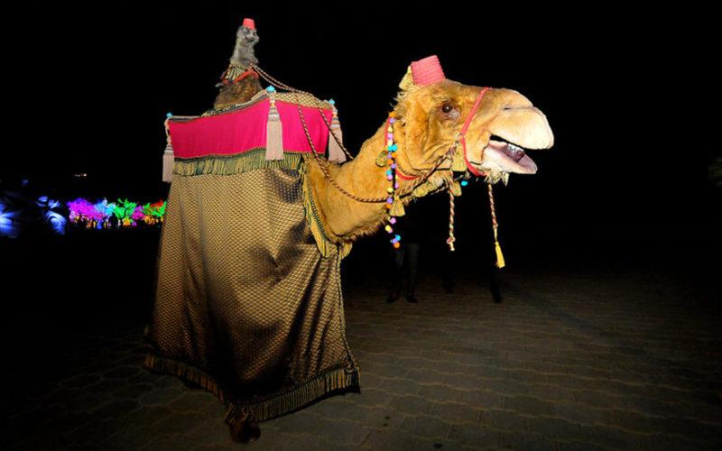 Prince Amir & Nazreddin - Camel and Meerkat - Walkabout characters