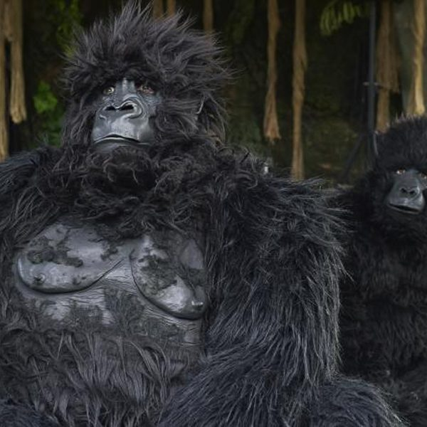 Gorillas - Gorilla family walkabout characters
